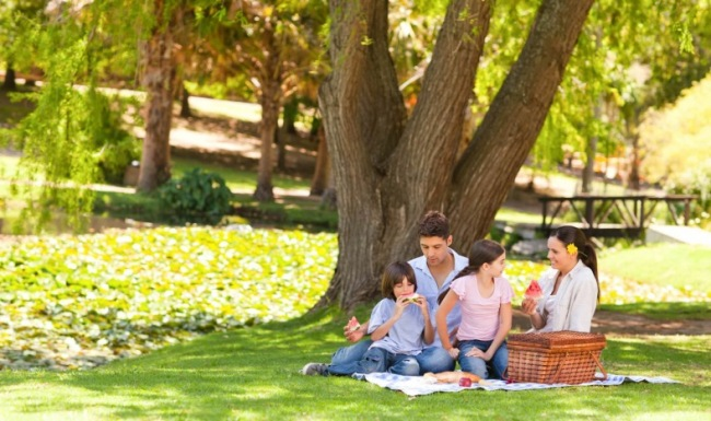 Family having a picnic under a tree in the part